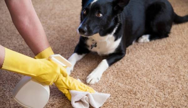 Eliminate Any Bad Smell From The Carpet
